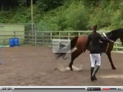What happend in this horse-riding-school