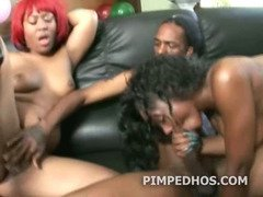 Group of black babes giving blowjob to a big cocked pimp