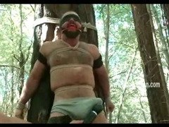 Rugged and muscular man is tied to a tree and has his cock and nipples teased