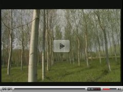 Black chick gets dp'ed by two white guys in the wilderness